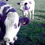 vaca-roxa-seth-godin